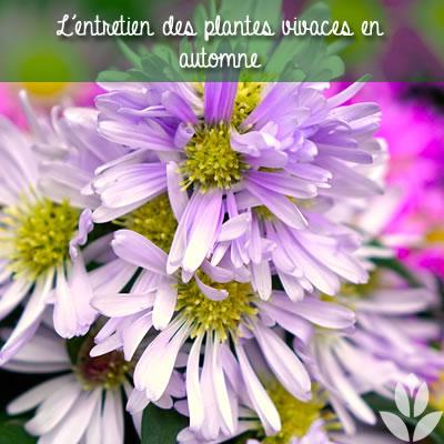 entretien des plantes vivaces en automne