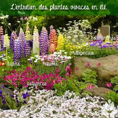 l'entretine des plantes vivaces en été