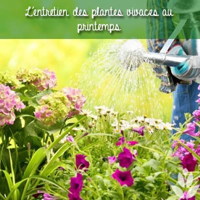 l'entretien des plantes vivaces au printemps
