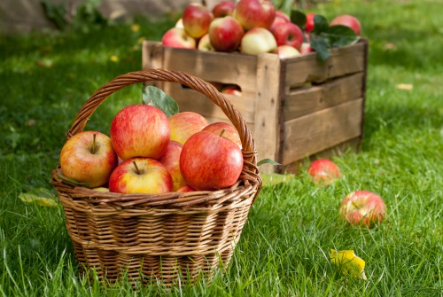 Comment tailler les fruitiers willemse vous conseille - A quel moment tailler les rosiers ...