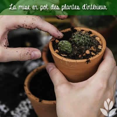 pot plantes interieur
