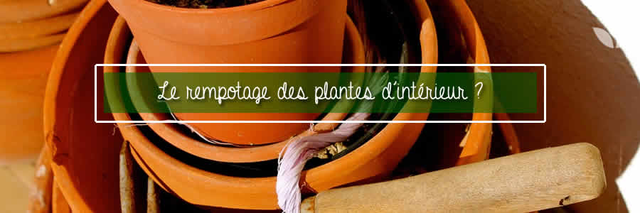 rempotage plantes interieur