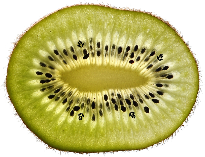 kiwi willemse