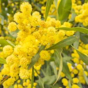 Jardin les conseils pour votre jardin de willemse france - Que faire au jardin en avril ...