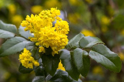 Que faire au jardin en avril willemse vous conseille - Que faire au jardin en avril ...