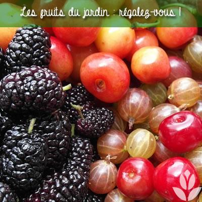 mûrier fruit rouge du jardin