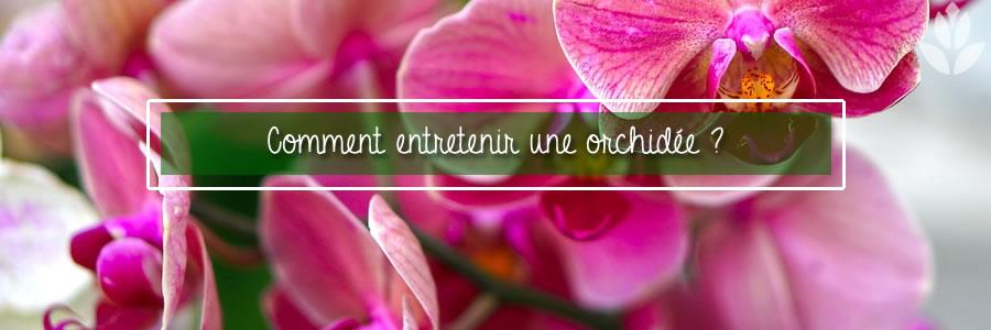 comment entetenir une orchidée ?