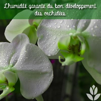 orchidées et humidité