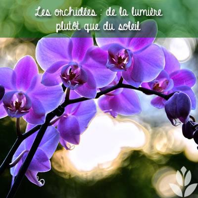 orchidées : l'importance de la lumière