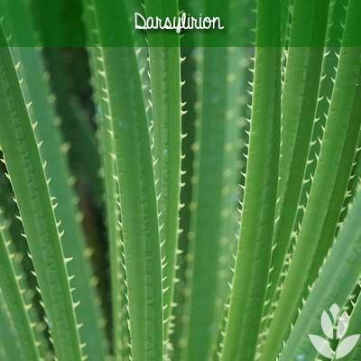 darsylirion