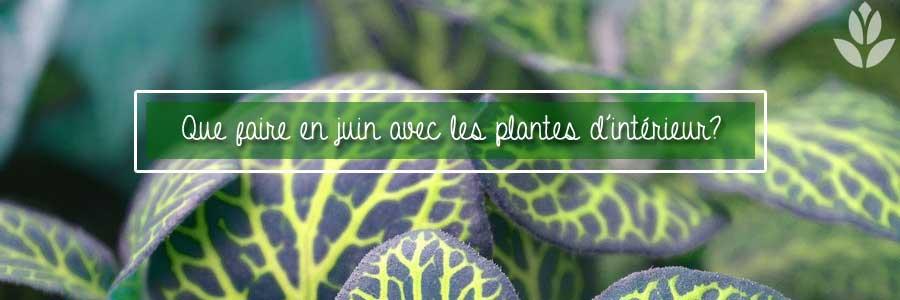 quel faire de mes plantes d'intérieur en juin?