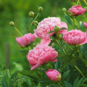jardin en juin