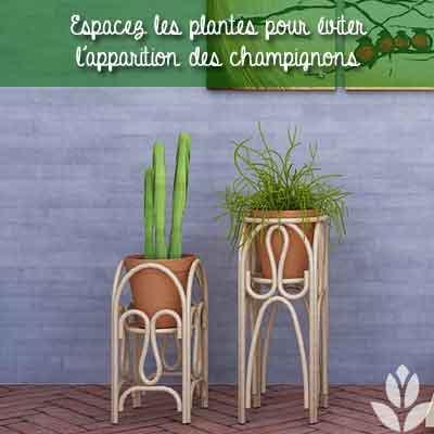 plantes intérieur espace
