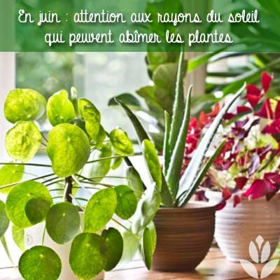 rayons du soleil plantes d'intérieur