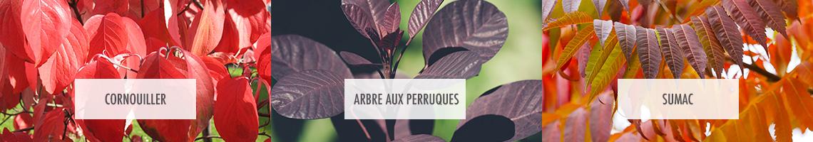 Arbustes au feuillage décoratifs en automne
