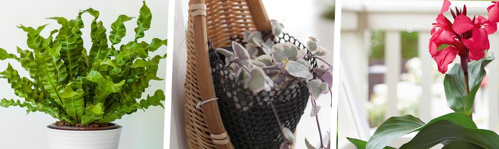 prendre soin de ses plantes d'intérieur durant l'été