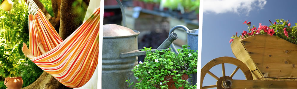 soins à apporter aux plantes vivaces durant l'été