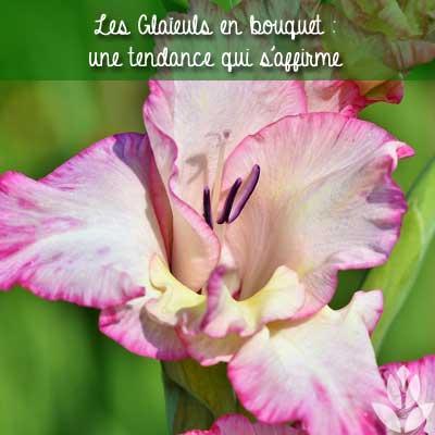 Les Glaïeuls en bouquet : une tendance qui s'affirme