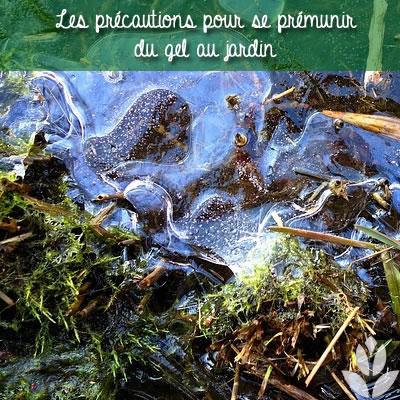 se prémunir du gel au jardin