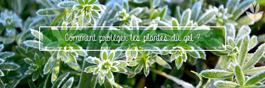 protéger les plantes du bel sur un balcon ou une terrasse