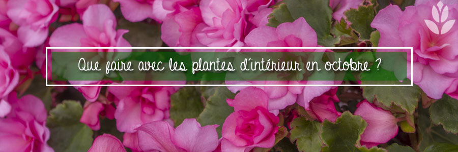 que faire avec les plantes d'intérieur en octobre