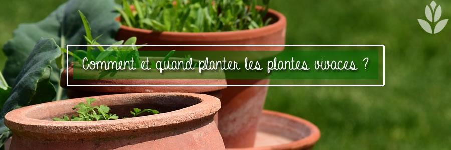 comment et qaund planter les plantes vivaces ?