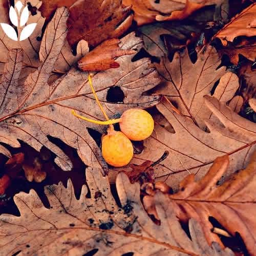 feuilles mortes et paillage
