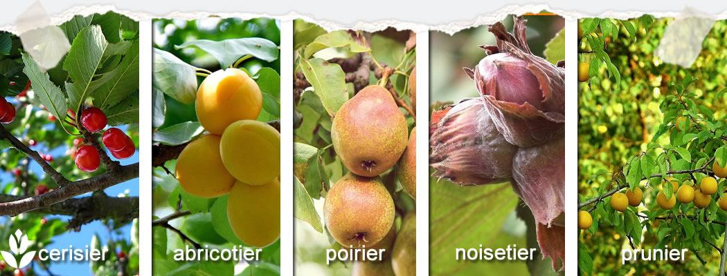 les grands fruitiers du jardin