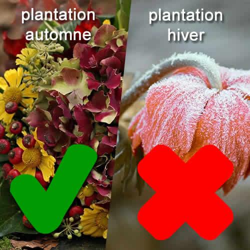 pas de plantation en hiver