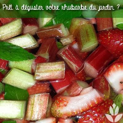 rhubarbe à déguster