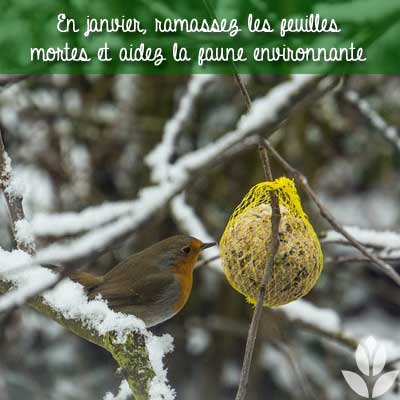 janvier oiseaux