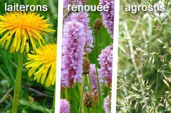 plantes sauvages sol argileux