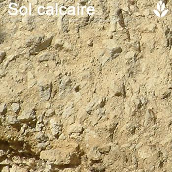 sol calcaire