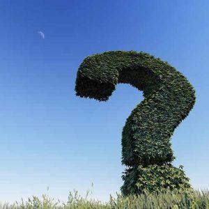 combine de plantes faut-il planter ?