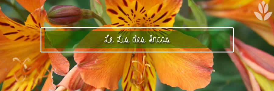lis des incas