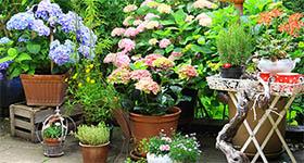 plantes_AZ