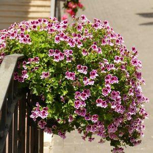 Comment entretenir mes plantes en Juillet