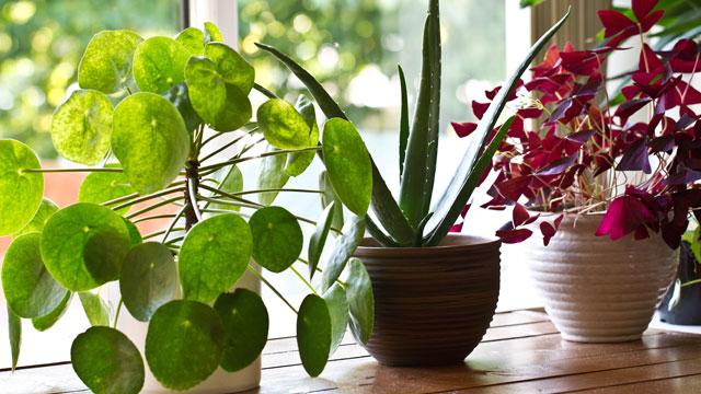 Entretenir les plantes d'intérieur en septembre