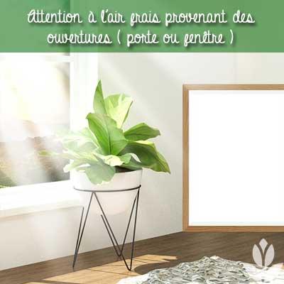 aération du logement et plante d'intérieur