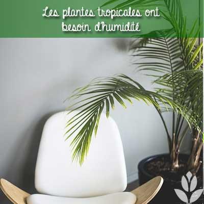 plantes tropicale d'intérieur