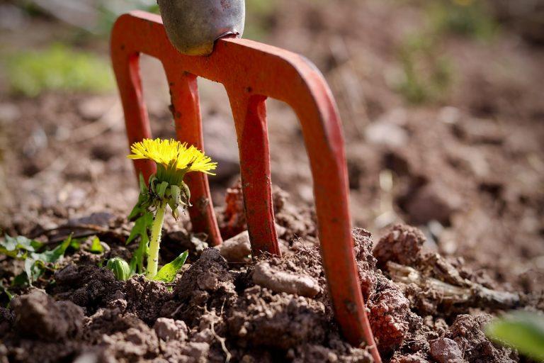 potager printemps