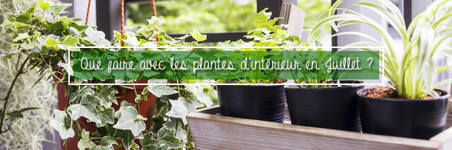 Au cours des années passées, les vagues de chaleur et les canicules se sont multipliées, nuisant aux êtres vivants, y compris les plantes d'intérieur. Certaines plantes apprécient le soleil et la chaleur, mais d'une manière générale, les périodes de chaleur prolongées peuvent faire souffrir les plantes d'intérieur.