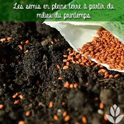 semis terre potager
