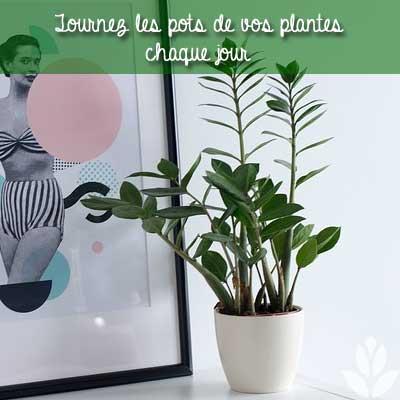 tourneez les pots des plantes d'intérieur