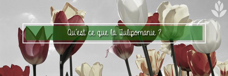 Qu'est ce que la Tulipomanie ?