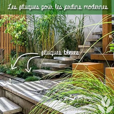 fétuques bleues dans les jardins modernes