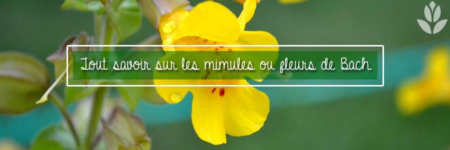 mimulus fleurs de bach tout savoir