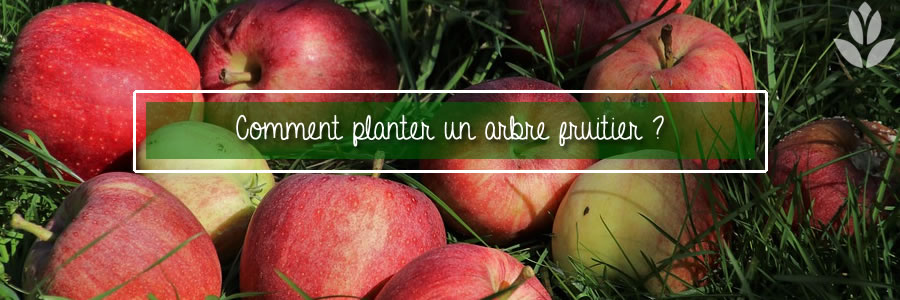 comment planter un arbre fruitier ?