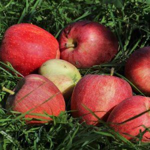 planter un arbre fruitier