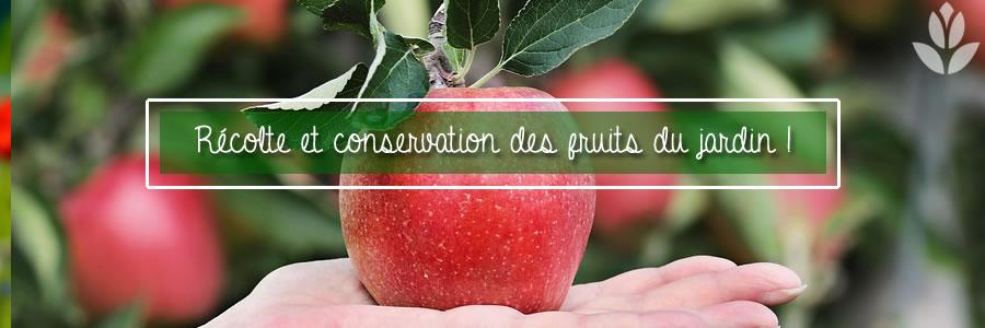 récolte et conservation des fruits du jardin